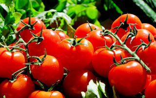 Tomatoes - Vital Force Naturopathic Medicine